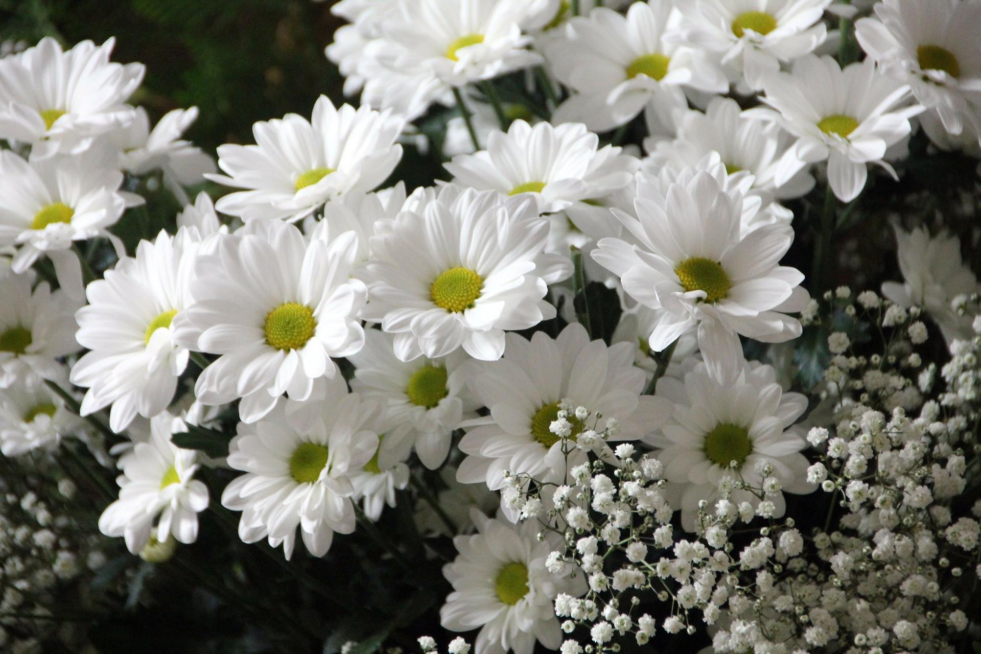 flowers-200602_1920.jpg